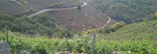 VITICULTURA HEROICA EN LA RIBEIRA SACRA